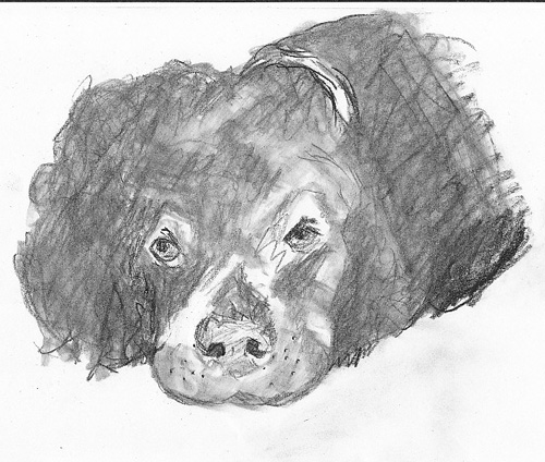 Picture of Spaniel